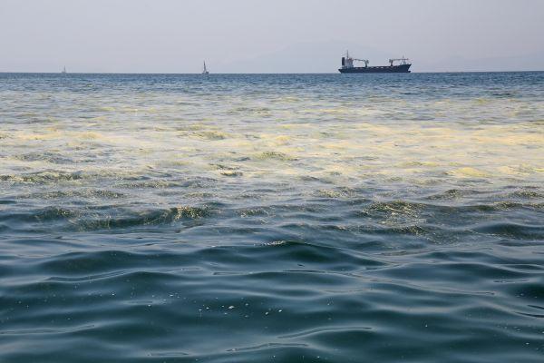Σκεπτικοί οι λουόμενοι παραμένουν στην ακτή, δεν τολμούν να μπουν στη θάλασσα μετά τις συστάσεις για απαγόρευση της κολύμβησης