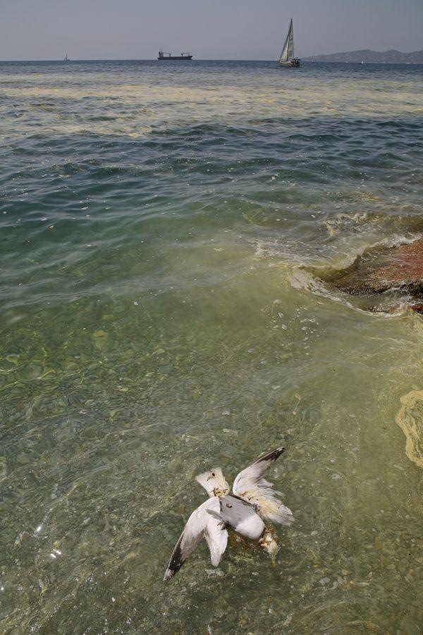 Μέχρι και νεκρό γλάρο εντόπισε ο φακός του «ΤΑΧΥΔΡΟΜΟΥ» στις Πλάκες όπου η θάλασσα κάθε άλλο παρά «καλούσε» για βουτιές