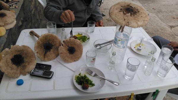 Ο Θωμάς Φασιανός, συνταξιούχος πλέον από την Τροχαία Βόλου με την παρέα του ανυποψίαστοι γεύτηκαν τα μανιτάρια με τσίπουρο στο Φανάρι