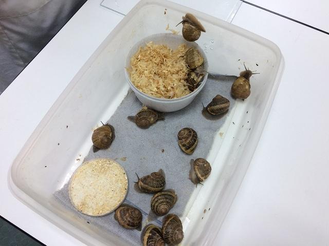 Παραγωγή σαλιγκαριών στο εργαστήριο