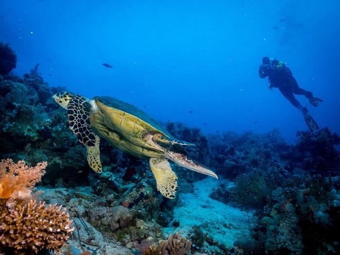 Θαλάσσια χελώνα παίρνει το πρωινό της στην άκρη του ακρωτηρίου του Σινά