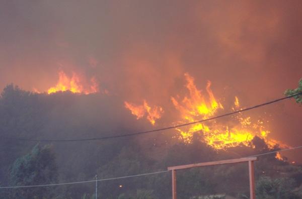 Φωτιά σε δασική έκταση στο Πουρί