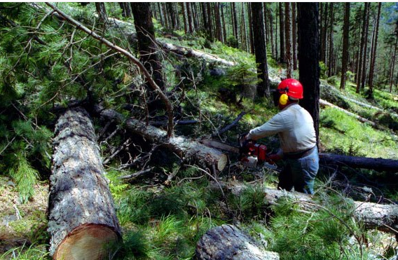 Asean the effects of illegal logging