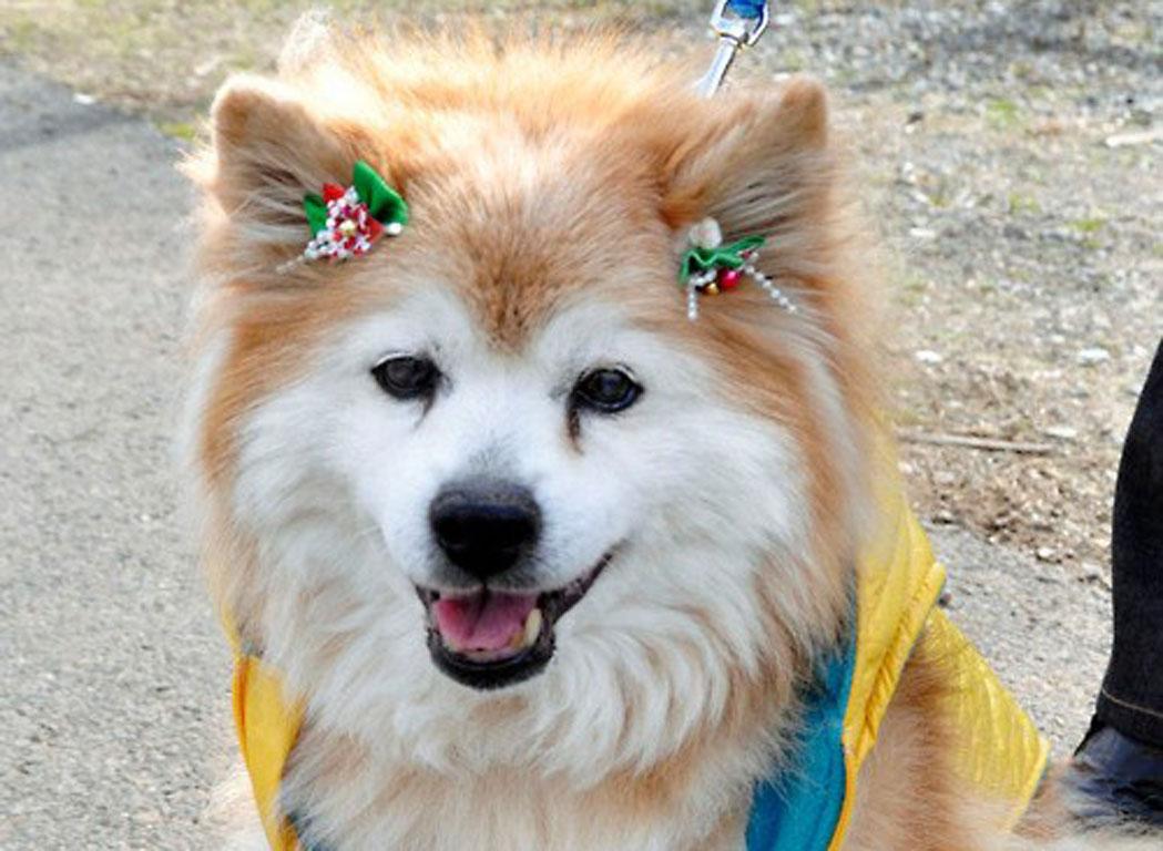 Πέθανε το γηραιότερο σκυλί του κόσμου