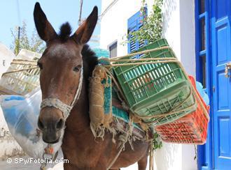 «Η Ελλάδα θα επιστρέψει στα κάρα εάν φύγει από το ευρώ»