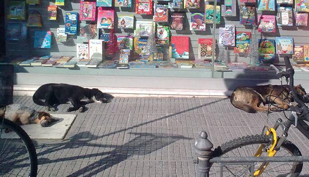 Αστεγοι και σκυλιά