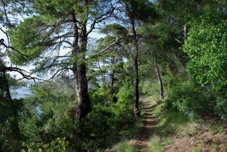 Σύγχρονα συστήματα παρακολούθησης στο δάσος της Αλοννήσου