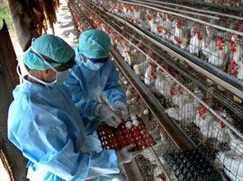 Θανατηφόρο κρούσμα της γρίπης των πτηνών στην Ινδονησία