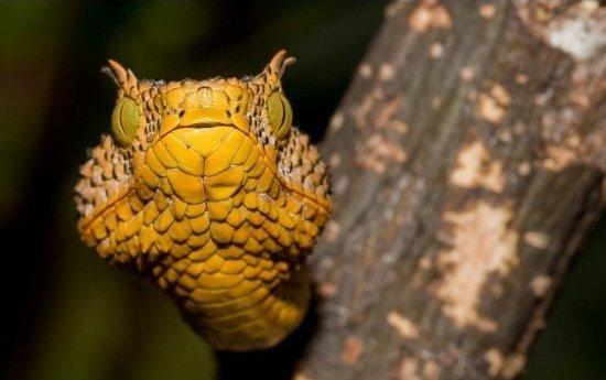 Νέο είδος φιδιού εντοπίστηκε στην Τανζανία