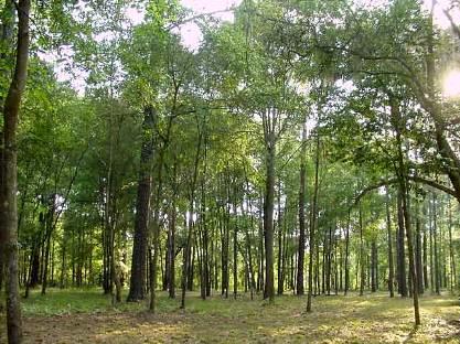 Ειδικό πρόγραμμα για τη διαφύλαξη δασών