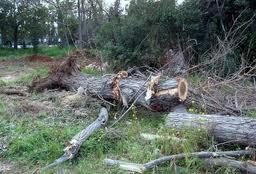 Κλωνάρι δέντρου σκότωσε 42χρονο στα Τρίκαλα