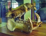 Διεργασίες για τη δημιουργία Μουσείου Φυσικής Ιστορίας