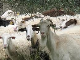 Καταστατική συνέλευση του Συνεταιρισμού  αιγοπροβατοτρόφων «Ρήγα Φεραίος»