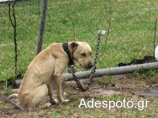 ΚρήτηΤον συνέλαβαν γιατί είχε το σκύλο του δεμένο στις λάσπες