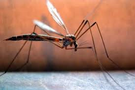 Τρίκαλα: Ετοιμάζονται για πόλεμο με τα …κουνούπια!