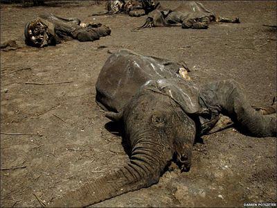 Νεκροί 100 ελέφαντες σε πάρκο του Καμερούν