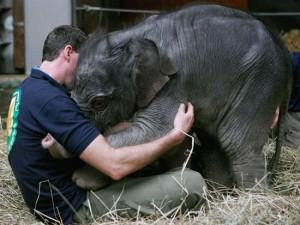 Συγκλονιστικό βίντεο: Καρέ-Καρέ η γέννηση ενός ελέφαντα!