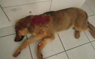 Χαλκιδική: Πυροβόλησε κουτάβι επειδή ενοχλούσε το εγγόνι του!