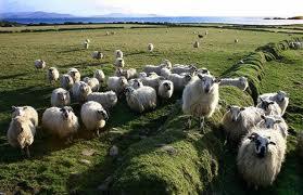 Η Ροδούλα Ζήση για τους ακτήμονες κτηνοτρόφους Μαγνησίας