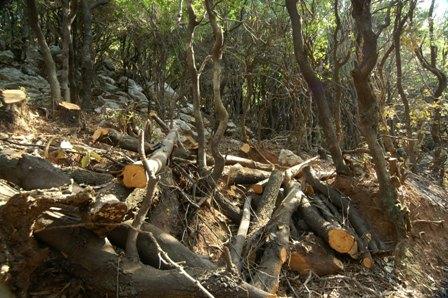 Τα δάση μας στο έλεος της κρίσης…