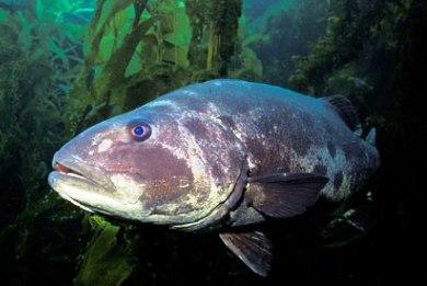 Ειρηνικός Ωκεανός: ένα στα δέκα θαλάσσια είδη κινδυνεύει με εξαφάνιση