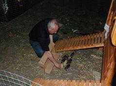 Κατηγορείται πρώην Αντιδήμαρχος στα Τρίκαλα για κλοπή …αυγών