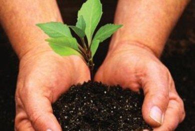 3.000 δέντρα θα φυτεύσει ο Δήμος Σοφάδων