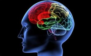 Νέο φως στις ζωτικές λειτουργίες του εγκεφάλου, από Έλληνα της διασποράς