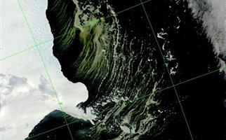 «Χαλί» από φύκια στην Ανταρκτική