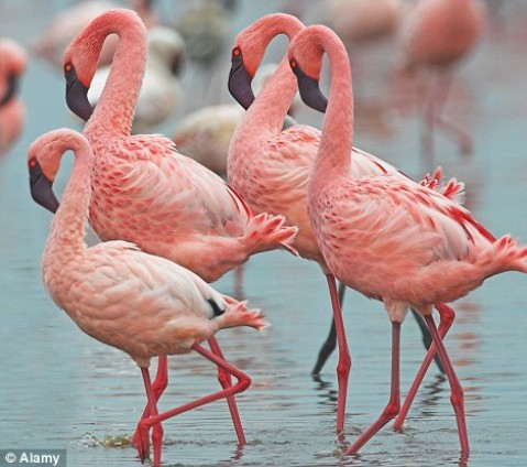 Κορίτσια, το ροζ ανήκει στην… σφαίρα της φαντασία σας!