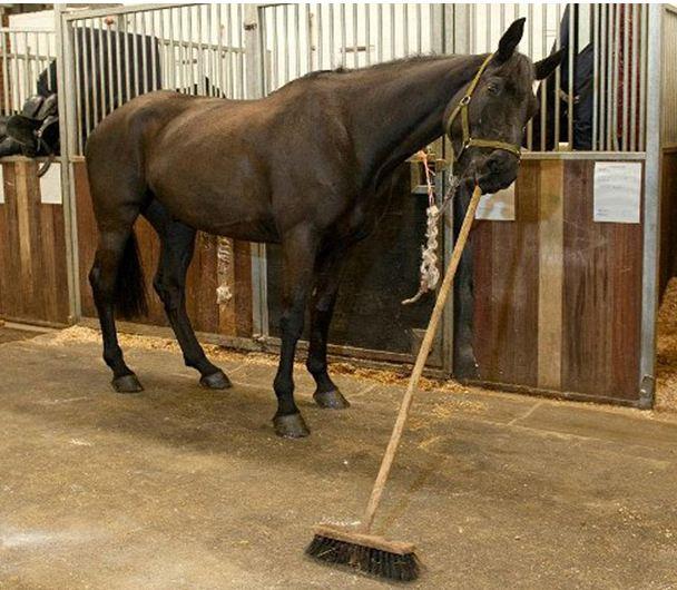Ένα άλογο… σκουπίζει το στάβλο του!
