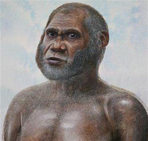 Ανακάλυψαν νέο είδος ανθρώπου: Τους ελαφανθρώπους