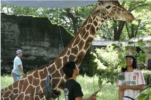 Ινδονησία: Εικόνες ντροπής σε ζωολογικό κήπο