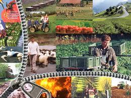 «Φυτοπροστασία- Βιολογική Γεωργία - Ασφαλή τρόφιμα»