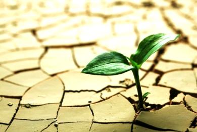 Τα φυτά «θυμούνται» την ξηρασία – Έρευνα γεννά ελπίδες για ανθεκτικές καλλιέργειες