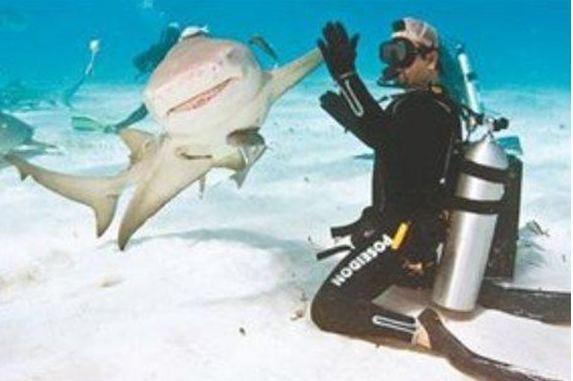 Χειραψία με καρχαρία
