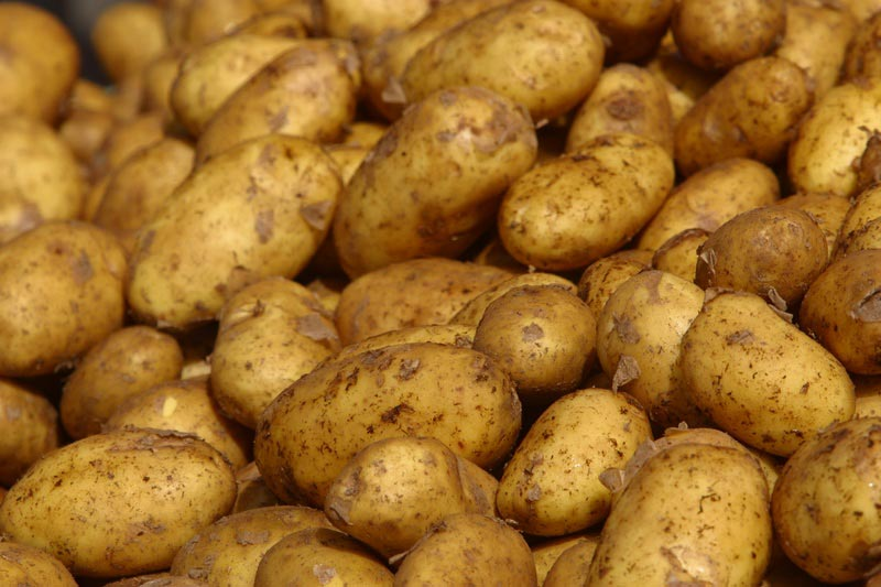 Διανομή φτηνής πατάτας στην Αλόννησο
