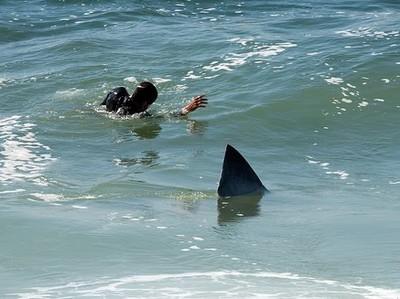 Νεκρός δύτης από επίθεση καρχαρία στην Αυστραλία