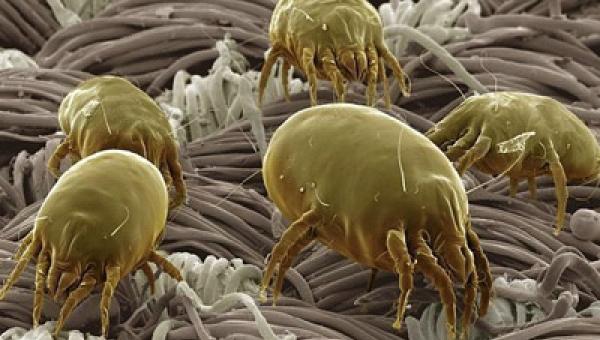 37 εκατ. μικρόβια!!!! κουβαλάμε όταν μπαίνουμε σε ένα δωμάτιο