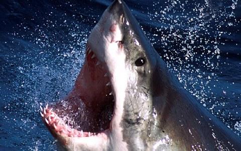Φονικό αμόκ έπιασε ξαφνικά τους καρχαρίες στη Δυτική Αυστραλία