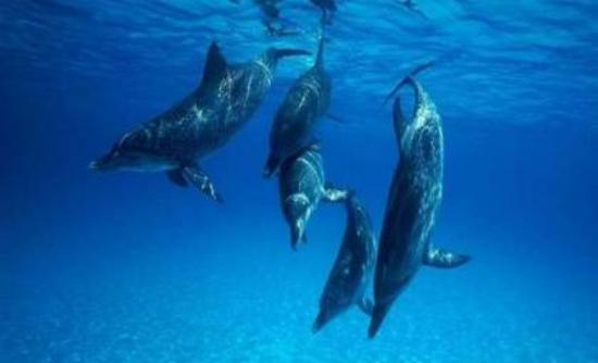 Σταματούν τις σεισμικές έρευνες για να προστατεύσουν τα δελφίνια