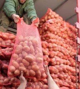 Δέκα και πλέον τόνοι πατάτας στην Αλόννησο