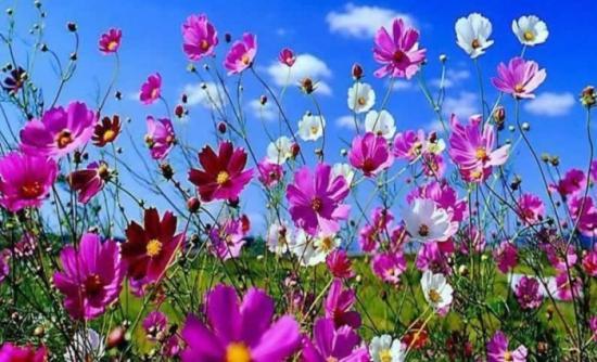 Μπορούν τα λουλούδια να μας πουν την ώρα;