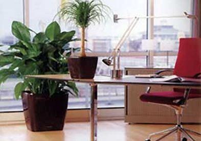 Τα οφέλη των φυτών στο χώρο εργασίας