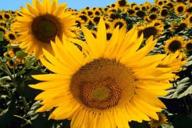 Γιατί τα φυτά δεν «καίγονται» από τον ήλιο;
