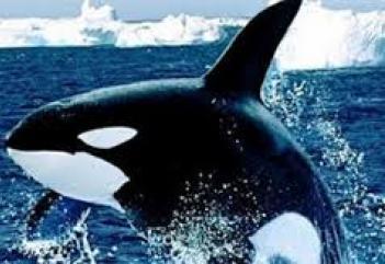 Αρώματα από εμετό φάλαινας