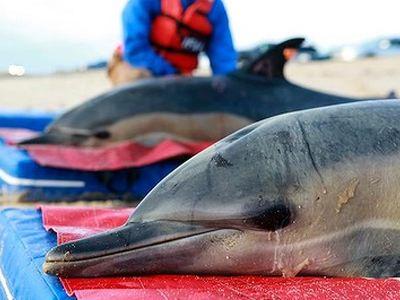 Εκατοντάδες δελφίνια νεκρά στο Περού