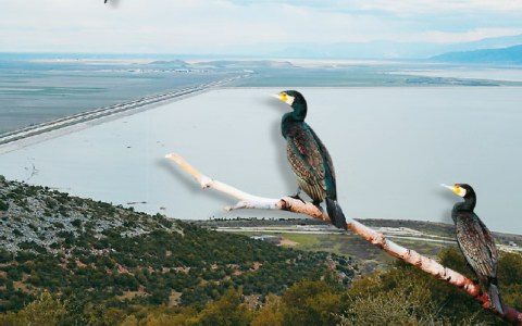 Ο Πηνειός «σκοτώνει» τη λίμνη Κάρλα