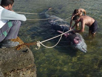 Περιβαλλοντικές οργανώσεις κατά των πολεμικών ασκήσεων στο Ιόνιο