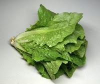 Τα Μαρούλια (Lactuca sativa)
